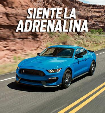 Experience the GT350