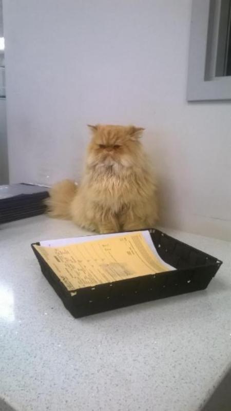 Cat in car showroom Toronto GTA