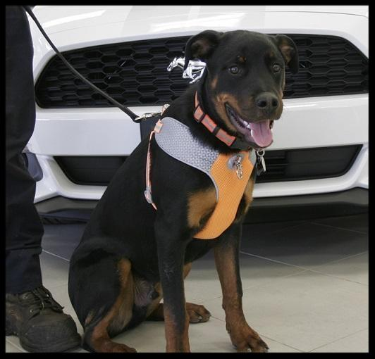 Dog friendly car dealership in York Region