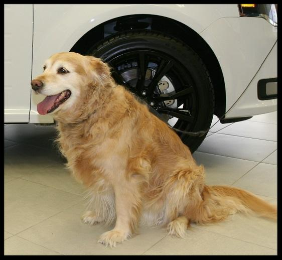 Pet friendly car dealership Ford Lincoln