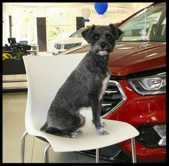 Pet friendly car dealership