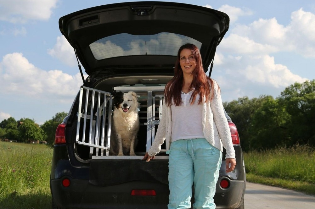 Take Care With Your Pet In The Car This Summer