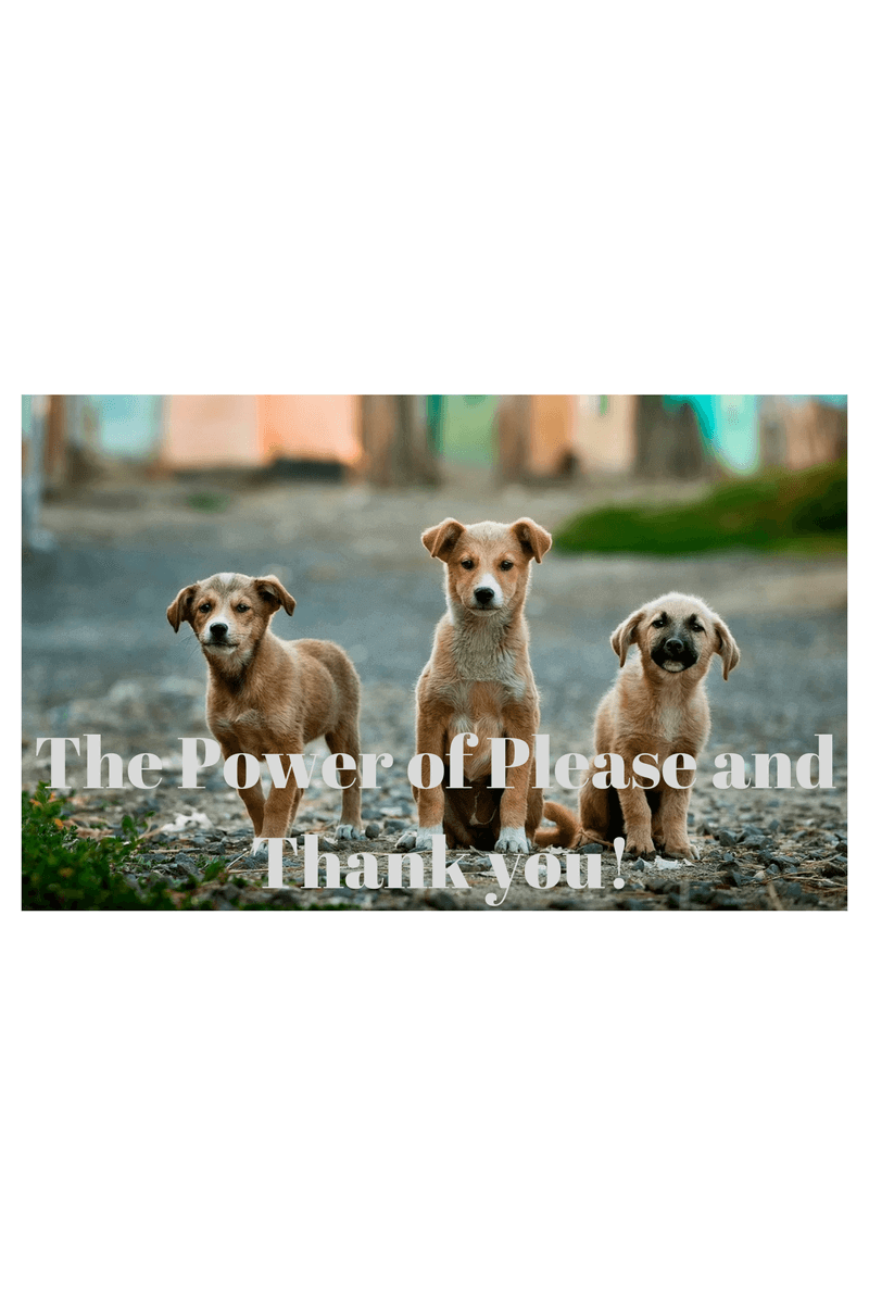Dogs Please and Thank You